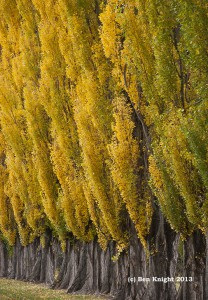 08S-Autumn Colour-wm