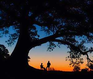 knightb-summer-evening